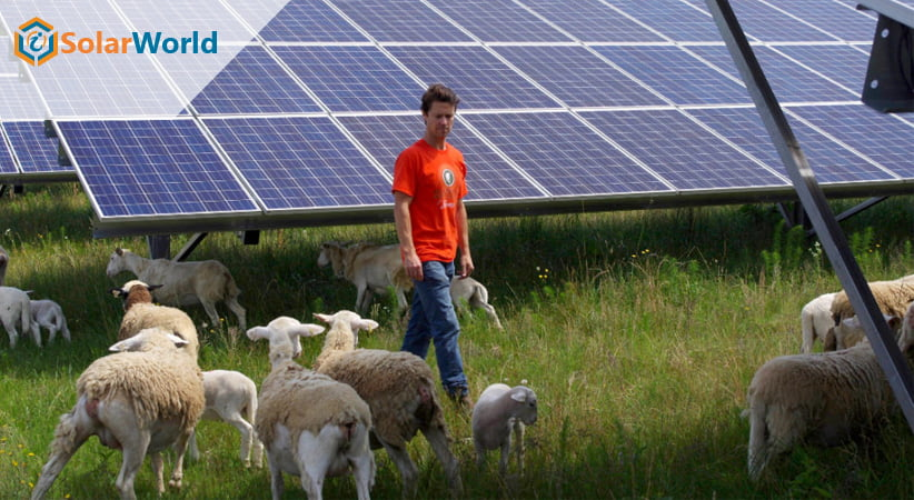 Solar Can Increase Grasses for Animals Up To 90%